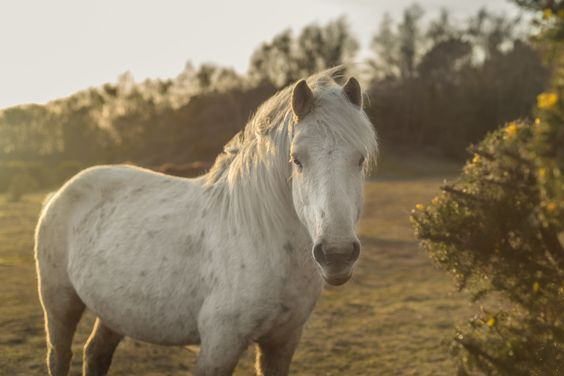The White Horse - by Matt Garbutt (A wild white horse of the New Forest)