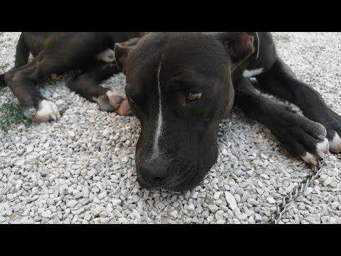 Good E Malinconico Canile Di Laterza Youtube Tiere Tierschutz