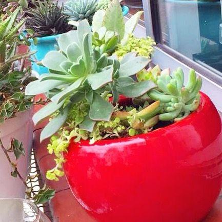 Esse tem destino: vai viajar com a gente até Bauru no fim do mês. Está na cidade ou quer presentear alguém por lá? Faça sua encomenda: oitominhocas@gmail.com  #plantinhas #suculentas #suculovers #ceramica #arranjodesuculentas #oitominhocas