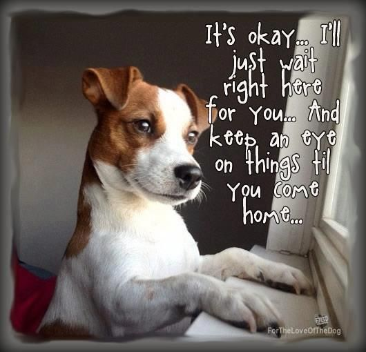 The look out window! Watching for you to come home! Make sure to leave him some…