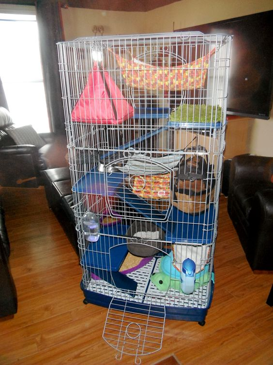 Ferret cage, Ferrets and Rat cage on Pinterest