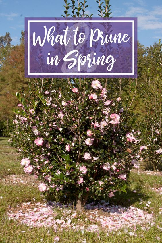 Spring Pruning March April Spring Lawn Care Southern Living Plants Plants