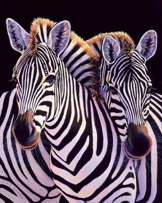 Zebra ü