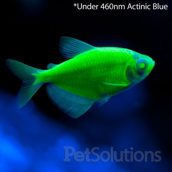 Glow green and live fish on pinterest for California fish planting