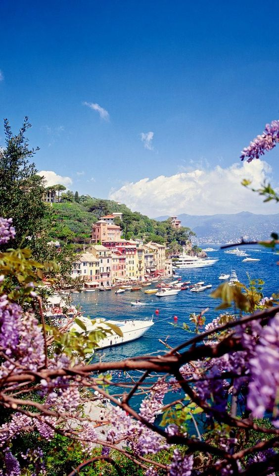 Portofino Genoa, Italy | Flickr - Photo Sharing! Flickr by MSC Cruises (USA) Liguria