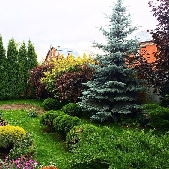 #landscapedesign #landscape #design #garden #gardendesign #ландшафтныйдизайн #ландшафтный_дизайн  #ландшафтныйдизайнер #natura #природныйсад #природа #сад #вашпейзаж