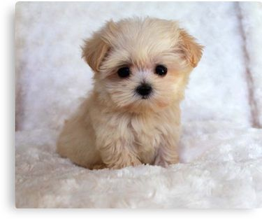 Cute Puppy Canvas Print Cute Animals Cute Dogs And Puppies Cute Dogs