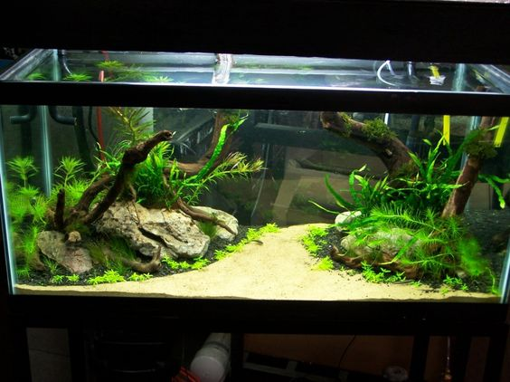 Aquascaping Designs for Your Beautiful Aquarium : White Sand Water ...