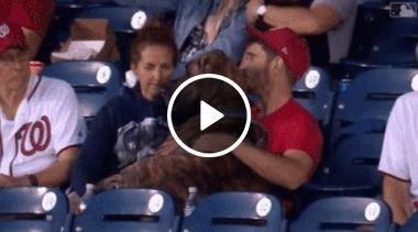 Será que só os humanos são torcedores, ou os cachorros também?