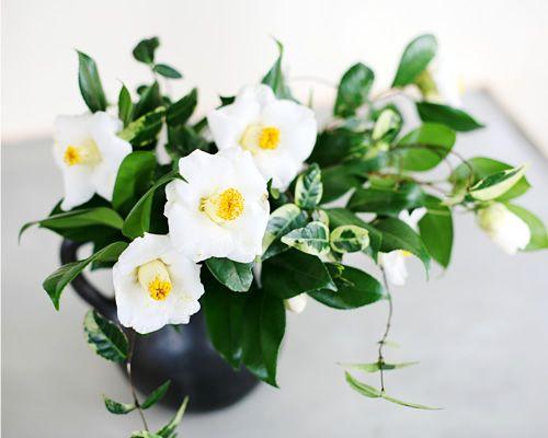 Tsubaki(Camellia) white
