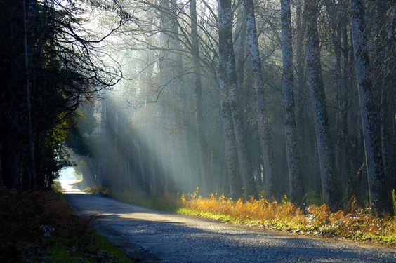 caminho para luz - Pesquisa Google