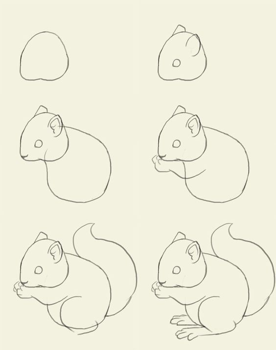 just in case ya know you ever need to draw a squirrel or