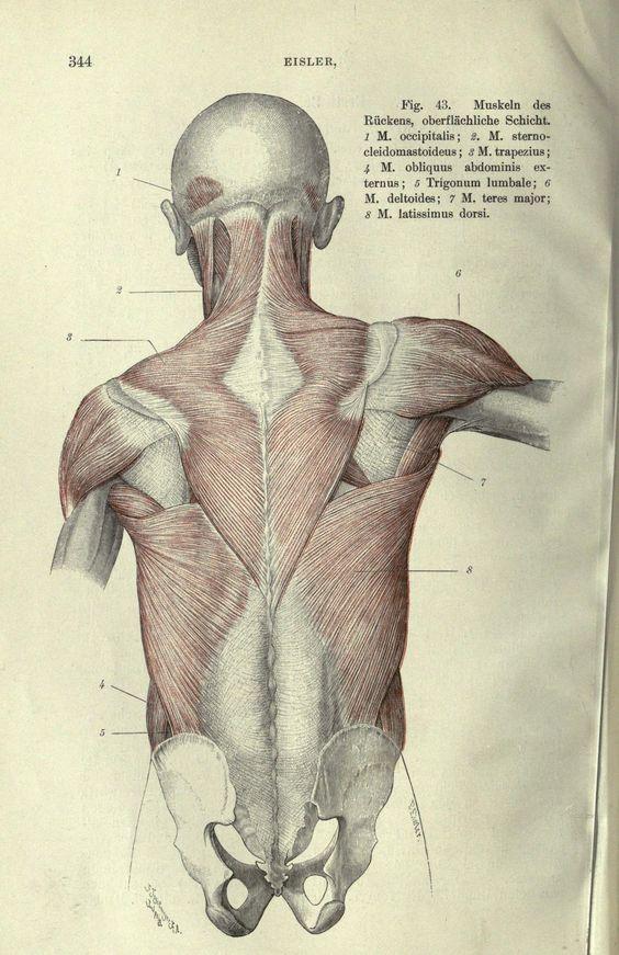 Ungewöhnlich Dritte Hinterhauptsnerv Anatomie Bilder - Anatomie ...