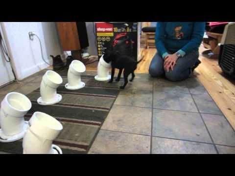 Lizzie Scent Tubes Youtube Dog Training Dogs
