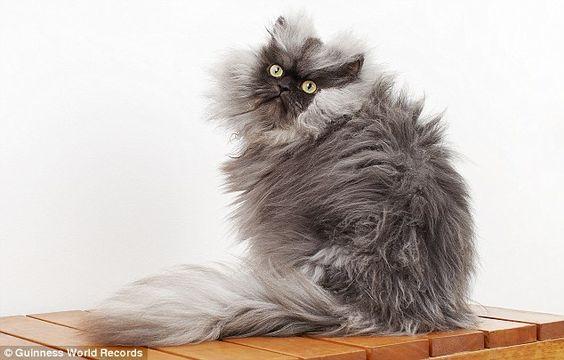 Cómo mantener el pelaje de mi gato perfecto. blog.theyellowpet.es