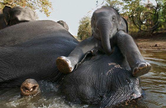 Pequeño elefante jugando