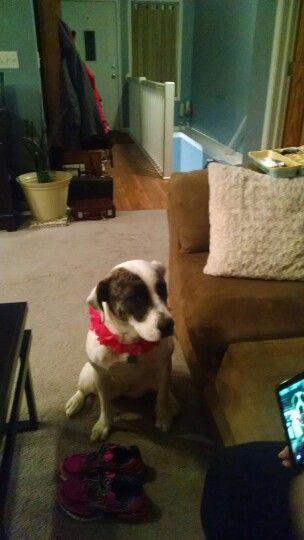 I put a necklace on my dog