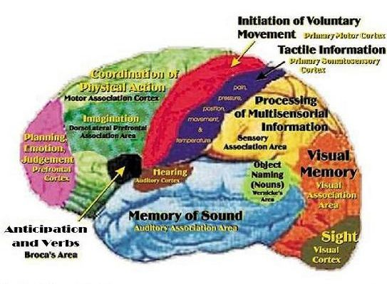 the definition physiology and disorders related to memory Sudden memory loss is more commonly referred to as amnesia  functional  neurological disorder prevent her from forming new memories, and a  thought  to be caused by damage to the hippocampus section of the brain  is a result of  traumatic injury, there are other functional causes, including illness,.