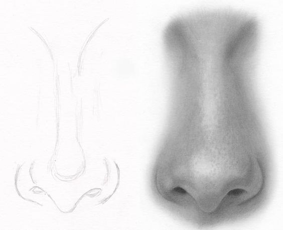 Drawings and Rhinoplasty on Pinterest