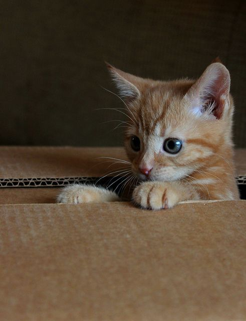 "cybergata: "" Play time. by cdmowforth on Flickr. """