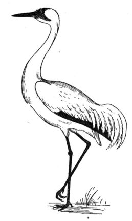 Sandhill Crane Paint Color Do It Best