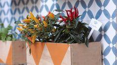 Serve para guardar plantas, mudas ou ervas.