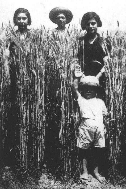 battle for grain Agricultural productivity and long-run development: evidence from mussolini's battle for grain mario f carilloy job market paper current version here.