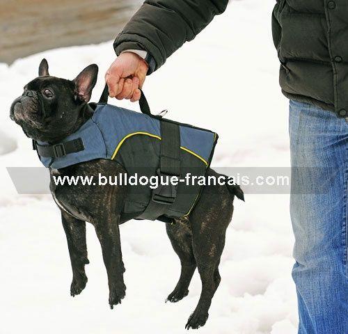 harnais spécial bouledogue français