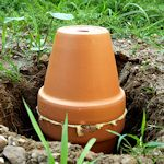 Buried clay pot irrigation for the garden...wow, very interested in trying this out