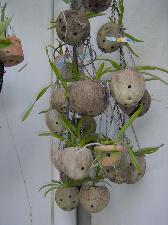 Cultivo de orqu deas sobre c scara de coco infojardin - Maceta para orquideas ...