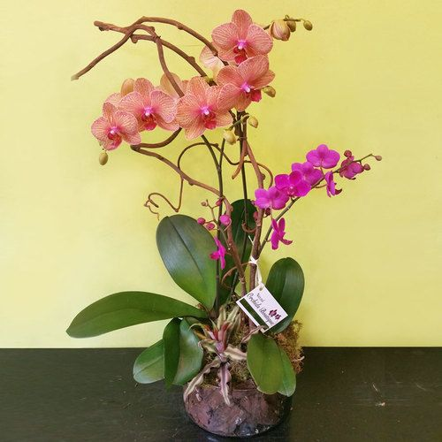 Love Is Here Phalaenopsis Orchid Arrangement Orchid Arrangements Phalaenopsis Orchid Orchids