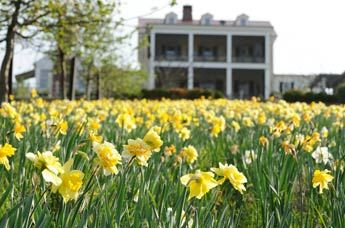 Daffodil Tours At P Allen Smith 39 S Garden Home At Moss