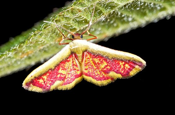 Vibrant moth