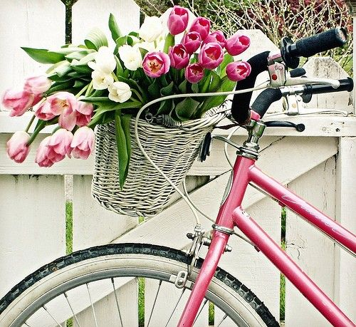 Tulips in a basket on a pink bike