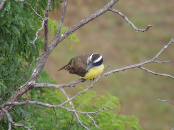 Minha janela - meus pássaros #amenimario #marioameni #passaros #bird #saopaulo