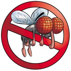 #Rimedi contro le #mosche: #trappole #ecologiche e carta #moschicida