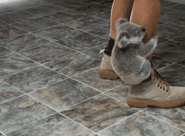 """Be like this koala. Next time you see someone's bare leg - grab onto it and yell, """"YOU'RE MY VEHICLE NOW!"""" 