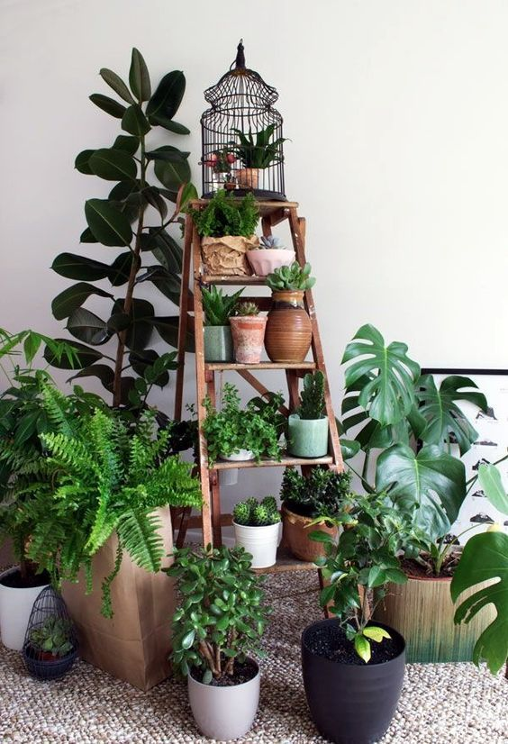 Create a beautiful indoor garden space