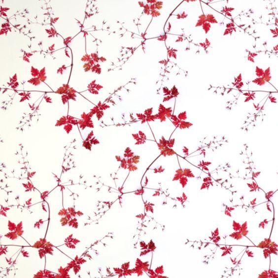 Wallfashion: FRONT YARD, Herb Robert, by Muurbloem
