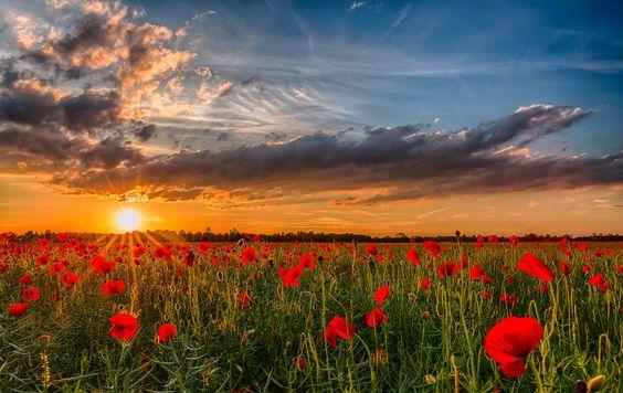Poppies by Achim Thomae on 500px