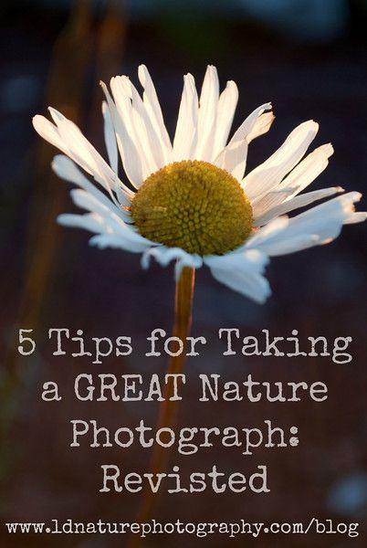 5 Tips for Taking a GREAT Nature Photograph: Revisited #nature #photography #tips  www.ldnaturephotography.com/blog
