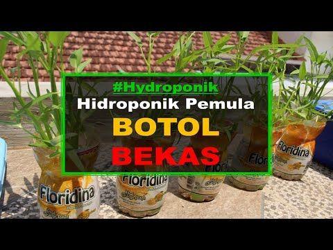 Tanaman Hidroponik Botol Bekas Untuk Pemula Youtube Hidroponik