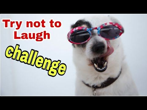 Try Not To Laugh Challenge Impossible Pets Animals Clean Version Youtube Try Not To Laugh Laugh Pets