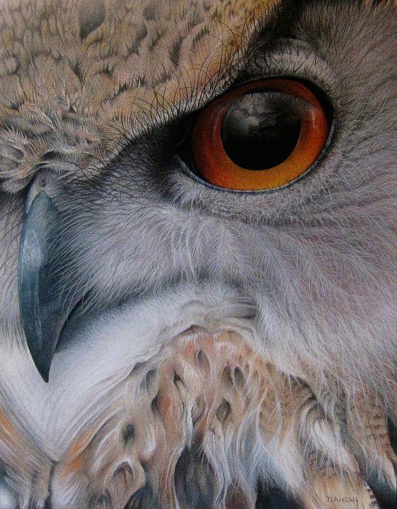 Eurasian Eagle Owl by Martin Aveling-  Esa mirada parece estar juzgando al hombre!!