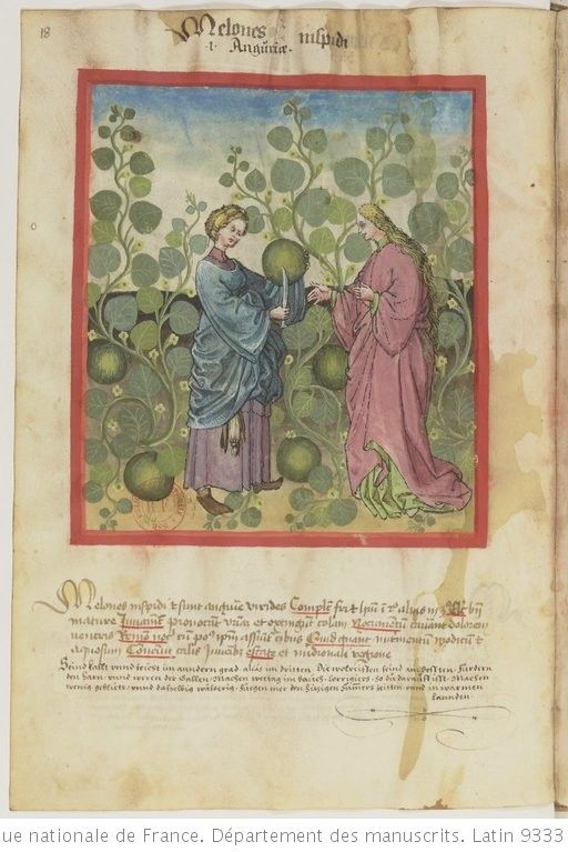 Melons Ibn Butlan Tacuinum Sanitatis Gallica Illustration Ancienne Illustrations Bibliotheque Nationale De France