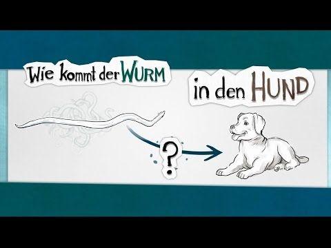 Blutarmut Anamie Beim Hund Eine Krankheit Die Jeden Hundebesitzer Sorgen Bereitet Tipps Hier Nachzulesen 10003 Hunde Hundebesitzer Und Krankheit