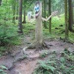 Schnitzeljagd Aufgaben im Wald: Nicht schlecht Herr Specht!
