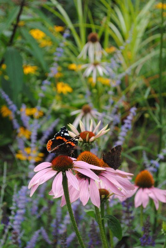The Garden Blog Kasi Andrew Bellingham Naturalistyczne Rabaty Dla Motyli I Ptakow W Stylu Preriowym Nowy Dodatek Do Naszego Ogrod Garden Plants Floral