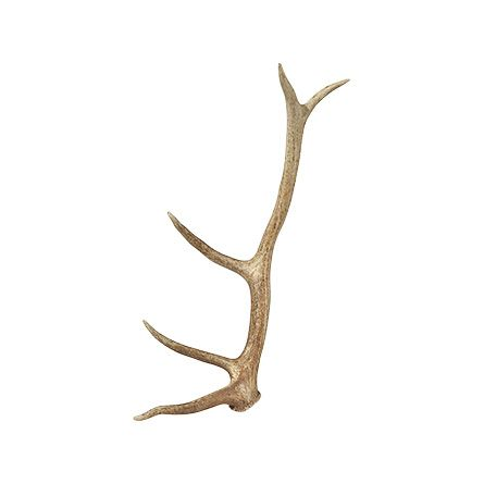 Genuine Elk Antler | Arhaus Furniture: