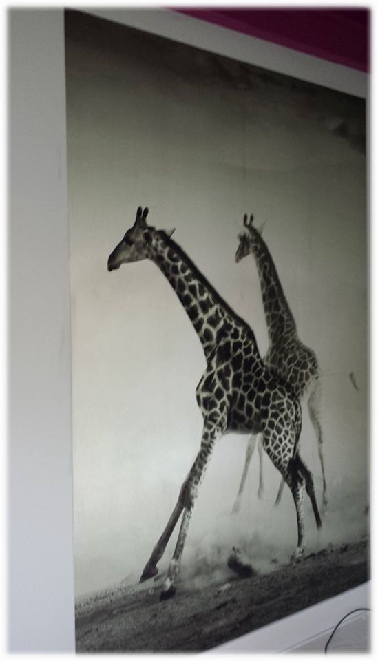 Safari zu Hause. Fototapete für Giraffen-Liebhaber und alle, die es etwas wilder mögen. Passt super zu den aktuellen Accessoires im Animal-Print. by Marco Lück, Nettetal  www.marcolueck.com #wandgestaltung #wand #fototapete #digital #Giraffe #Tiere #wildlife #marcolueck